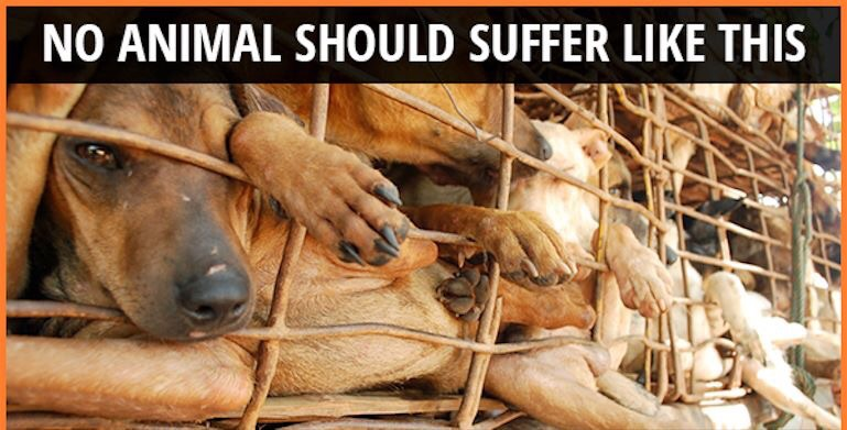 Image result for stop yulin forever
