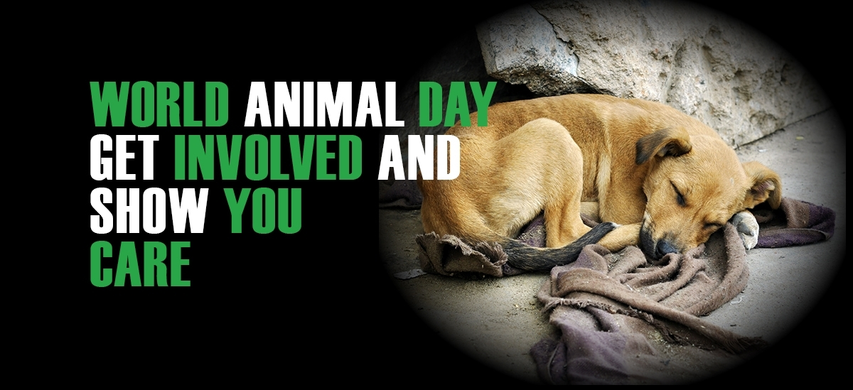 Welcome to World animal Day