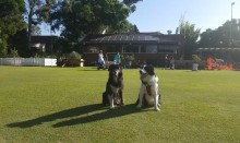 World Animal Day Festival at Petersham Bowling Club