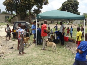 Veterinary Care to Rural Dogs, Cats and Donkeys