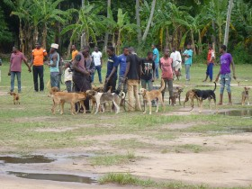 Zanzibar 10th National Rabies Awareness raising and Vaccination campaign.