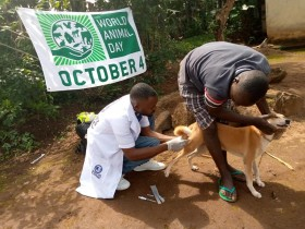 OIPA Cameroon  joined  the rest of world  to commemorate World Animal Day .