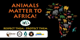 Animals Matter to Africa-Cape Town
