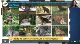 Nepris Virtual Presentation for World Animal Day
