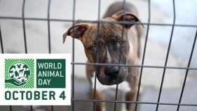 We donate 5 euros per order during animal day!