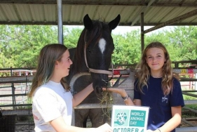 2020 WORLD ANIMAL DAY at F.R.I.E.N.D.S. Horse Rescue & Sanctuary