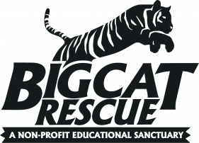 Big Cat Rescue celebrates World Animal Day