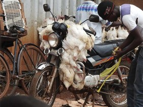 We Care - Stop Cruel Transport of Animals = Timasamala - Lekani Kunyamula Ziweto Mwankhaza