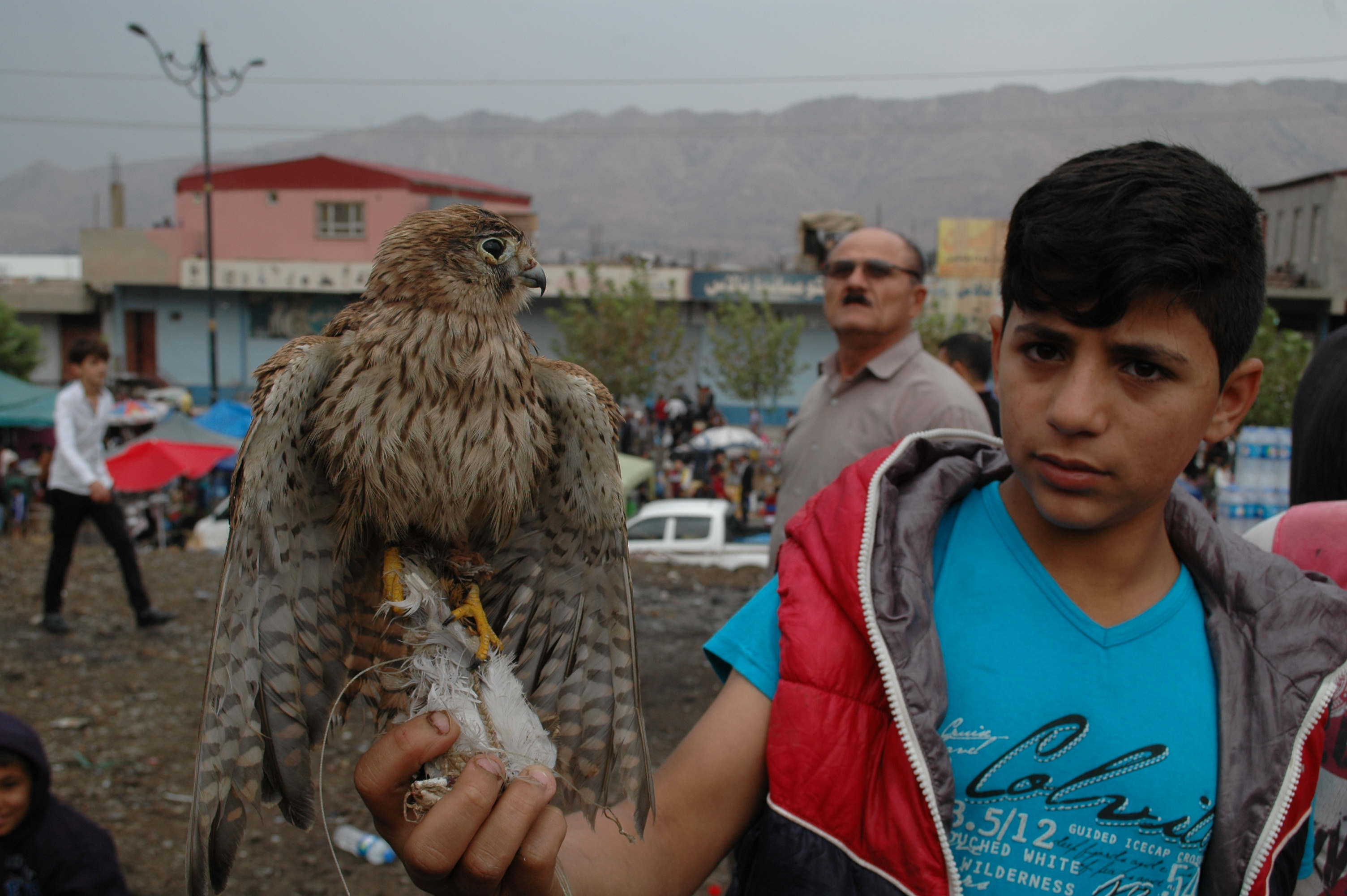 Kurdistan celebrates World Animal Day