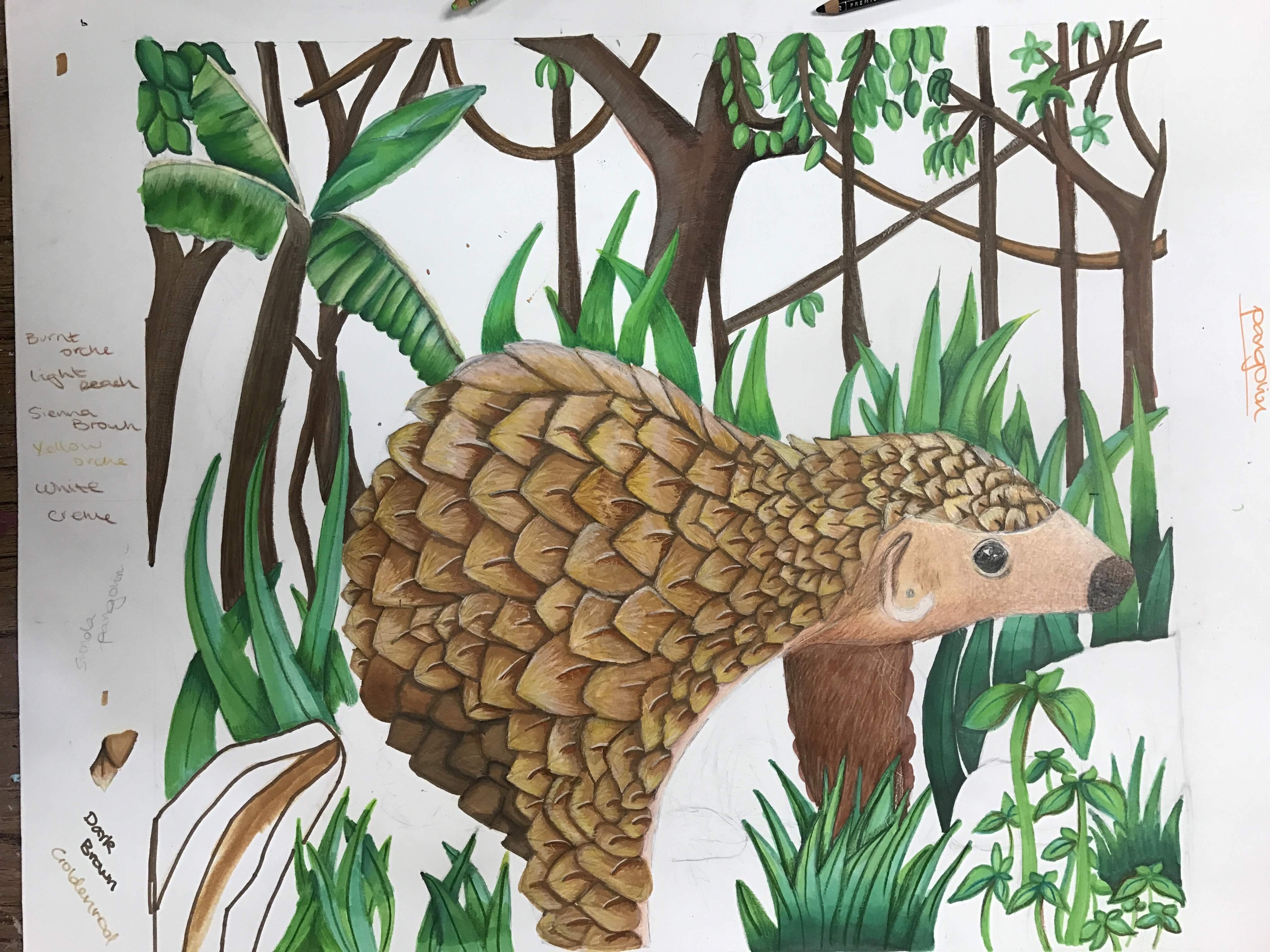 Global Pangolin Awareness Art Campaign