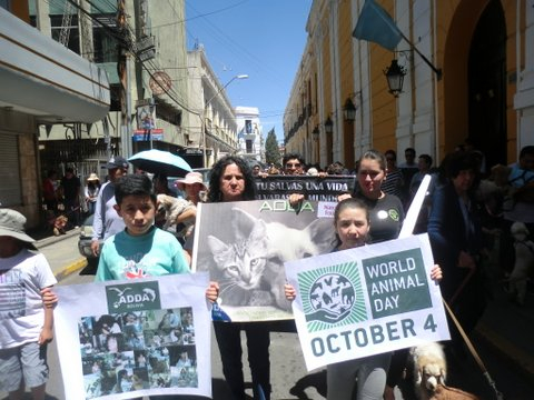 Cochabamba, Bolivia, celebrates World Animal Day