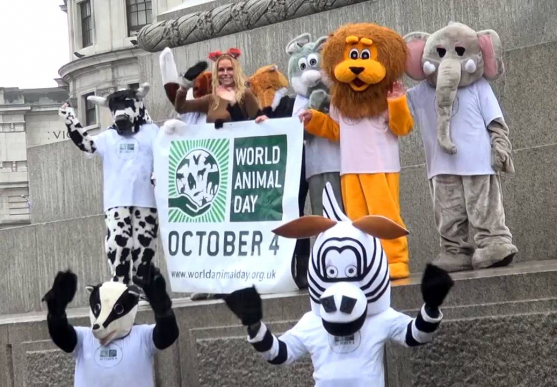 World Animal Day Music Video