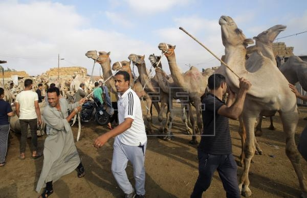 Animal Abuse Action Against Birkash Camel Market