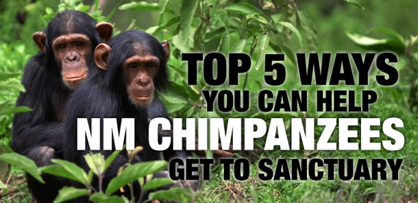 Celebrate #WorldAnimalDay with five actions for #chimpanzees!
