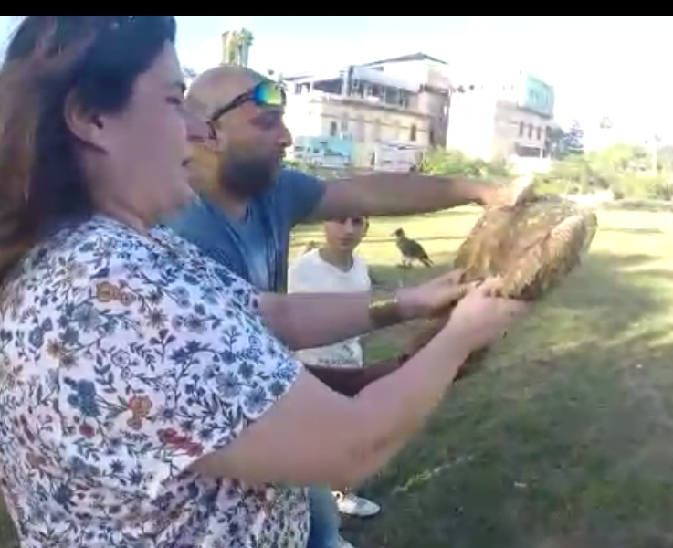 Releasing Falcons