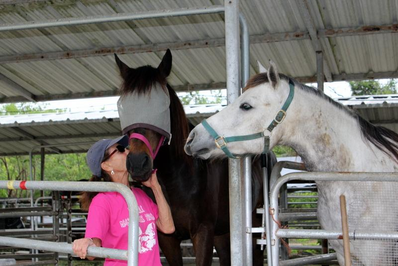 Support FRIENDS Horse Rescue & Sanctuary on World Animal Day 2018