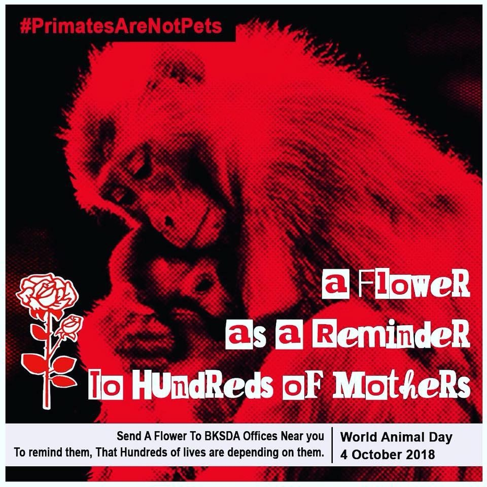 Sending flowers to remind the mothers of primate babies killed for the primate pet trade