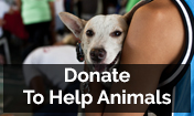DONATE TO HELP ANIMALS