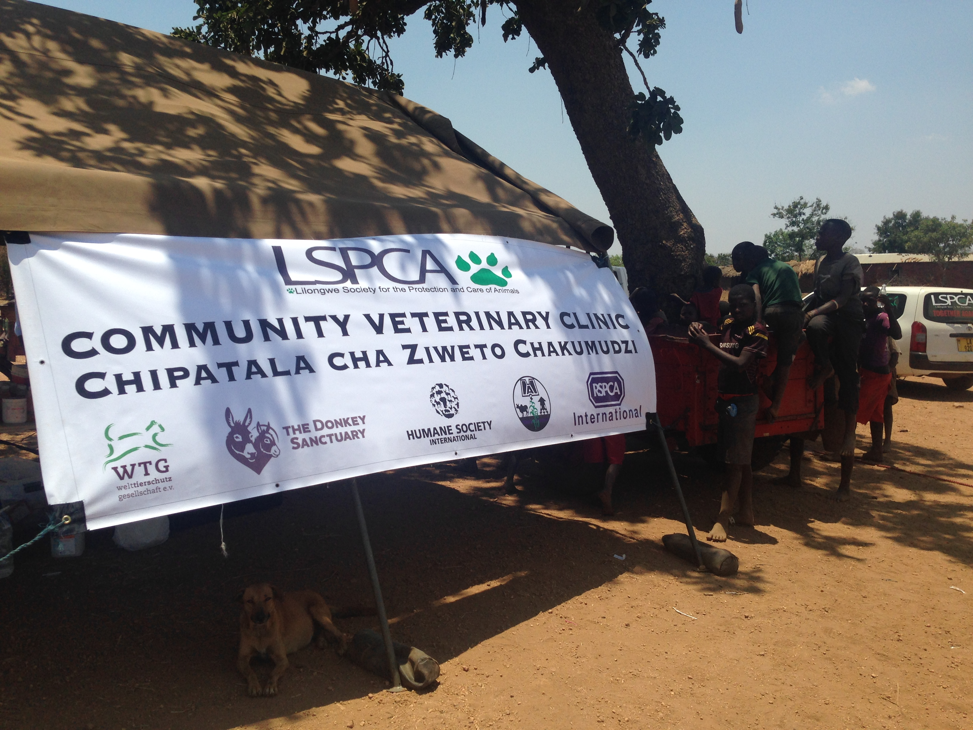 LSPCA and partners offer weekly mobile community veterinary clinics to provide vital veterinary care to farm animals and pets in rural areas