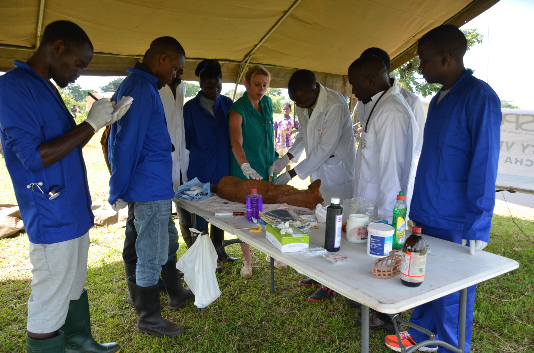 LUANAR students receive instruction at a spay day in a village near Lilongwe