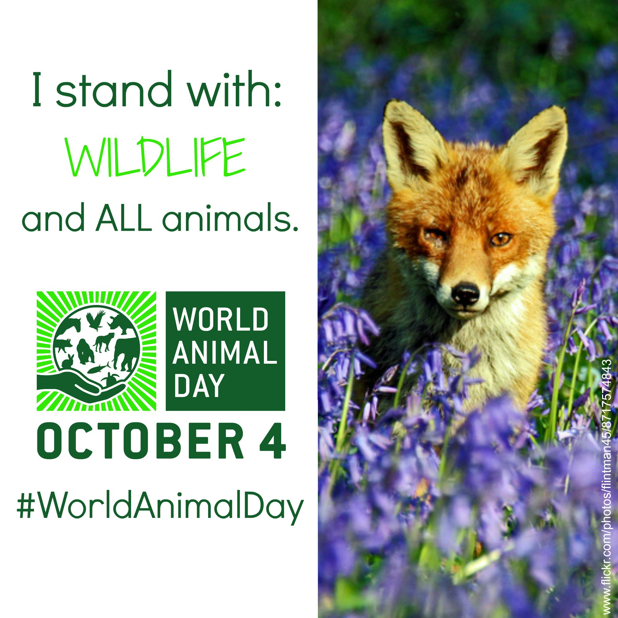 useful resources to support your world animal day celebration