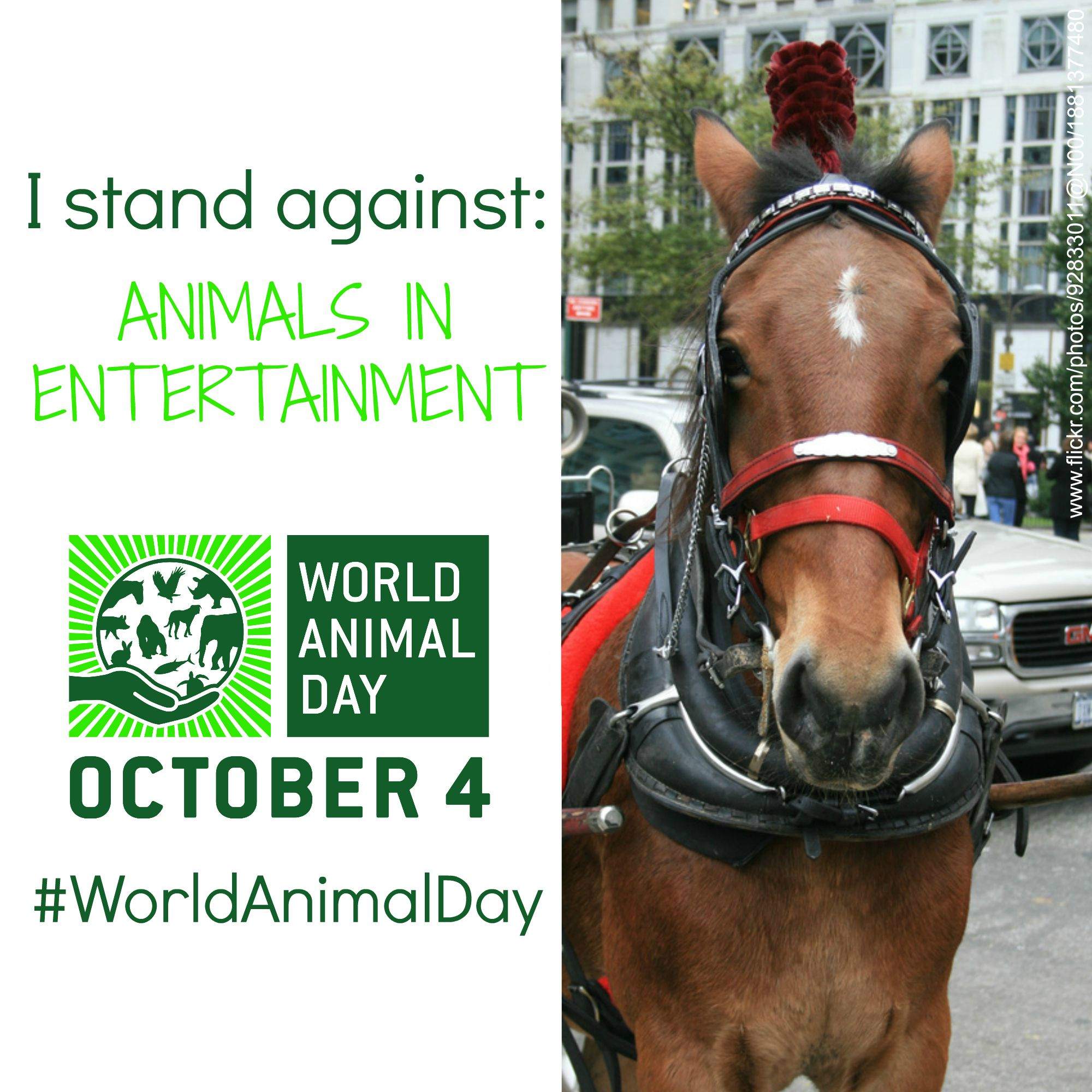 world horse day