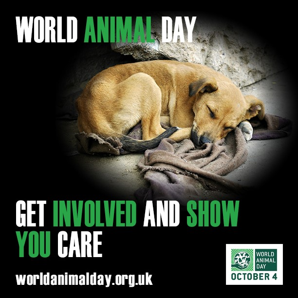 Dog - World Animal Day