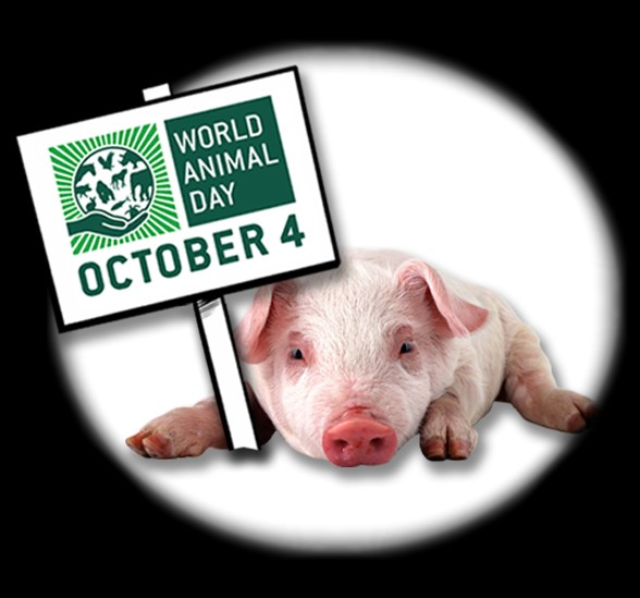 Pig - World Animal Day